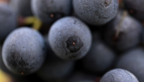 racimo-uvas