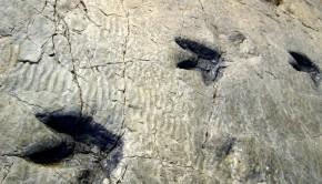 huellas dinosaurios piedra