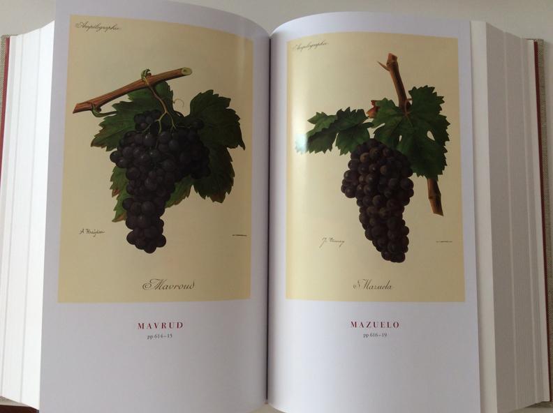 variedades-uva