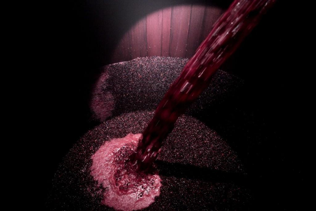 vino-bodega