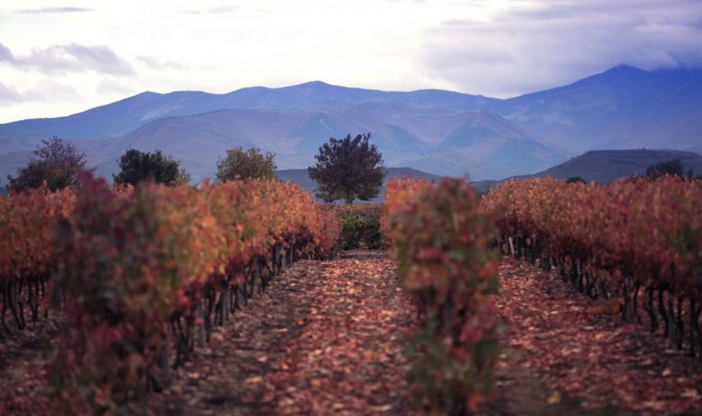 viñedos rioja campo