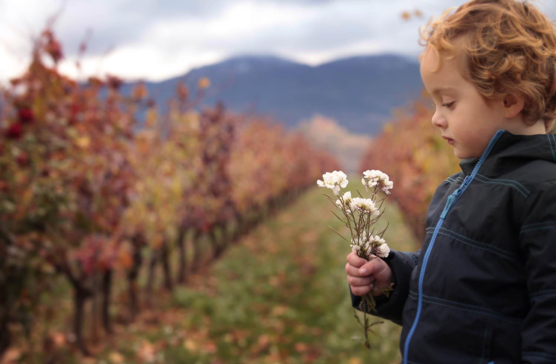 niño-viñedos-la-rioja