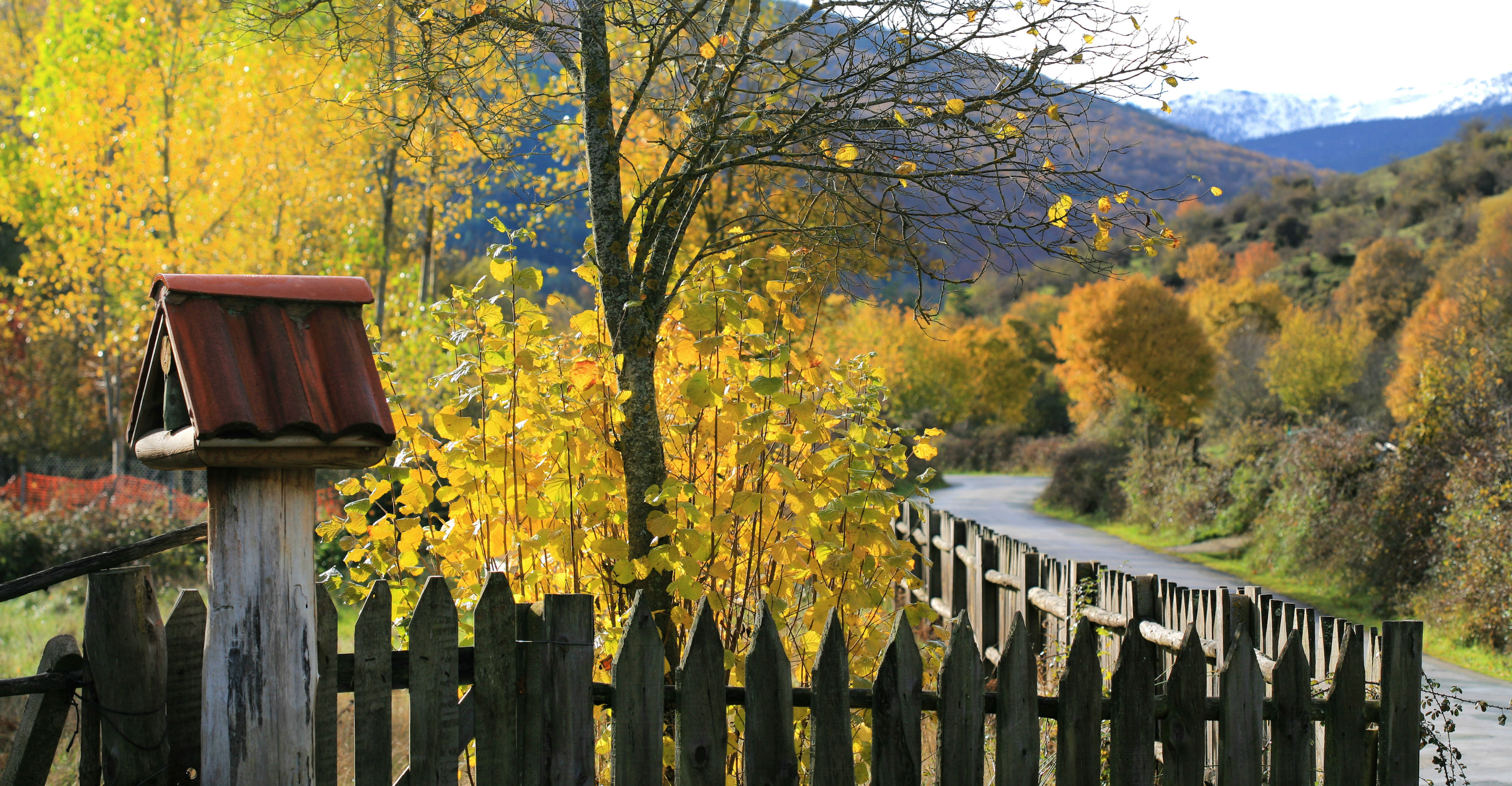 sierra-cebollera-otoño