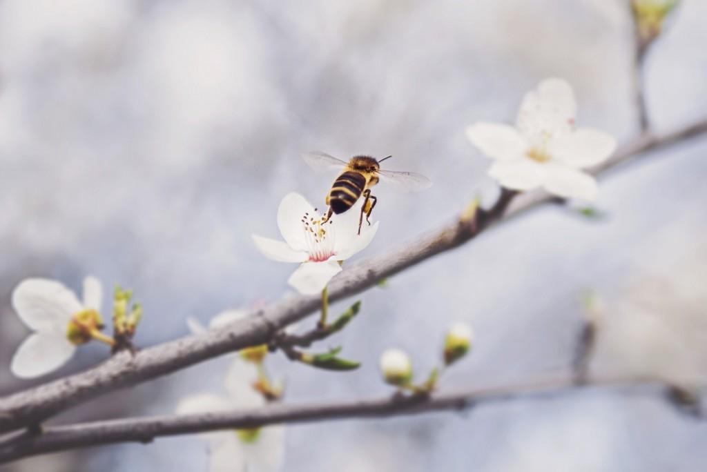 abeja flores volar