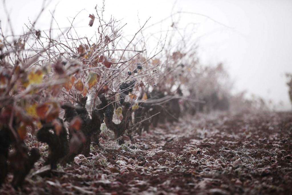 Vinedos en invierno | Blog de Vivanco