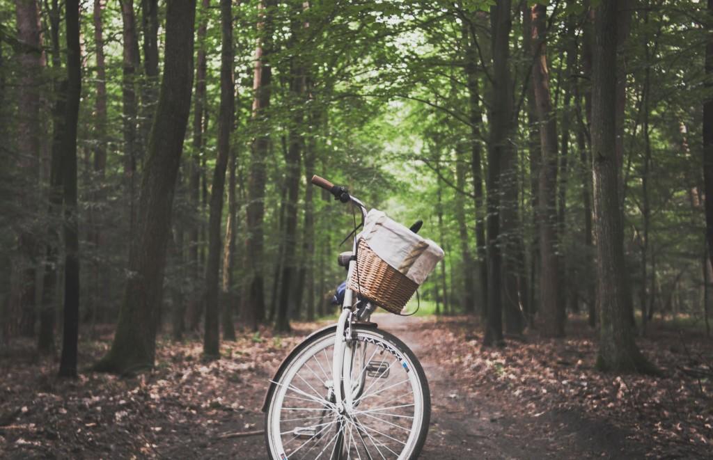 bicicleta campo bosque naturaleza