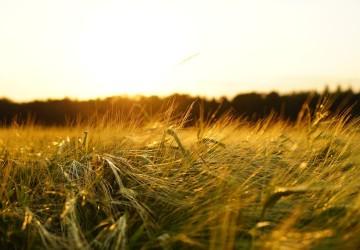 campo naturaleza