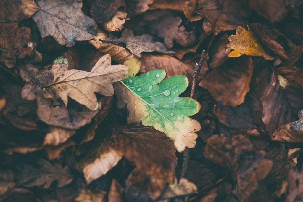 hojas campo