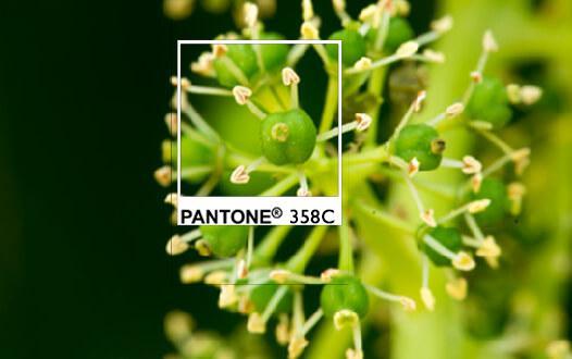 pantone 358