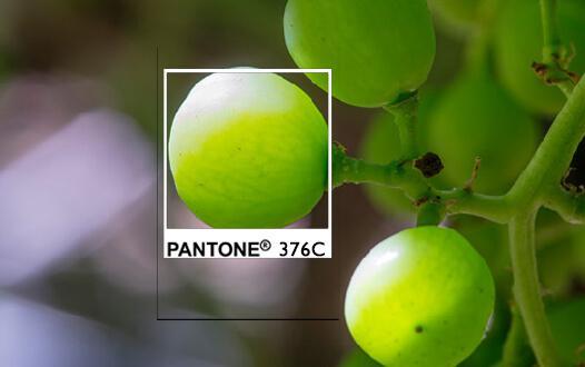pantone 376