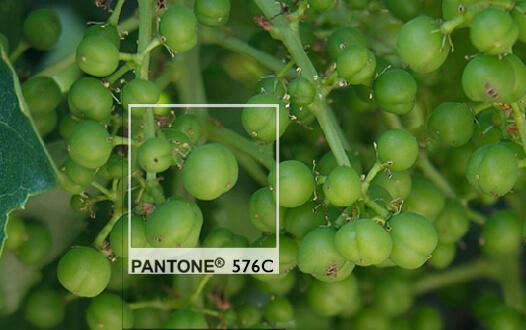 pantone 576