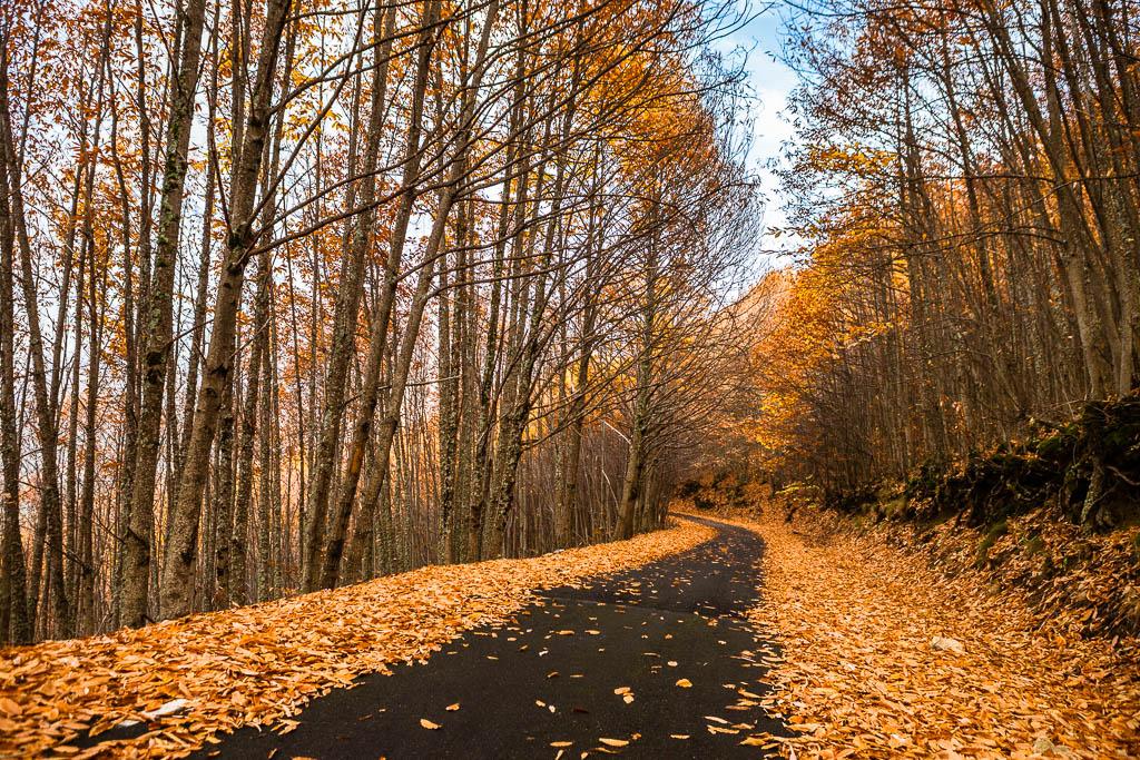 bosque carretera ojas