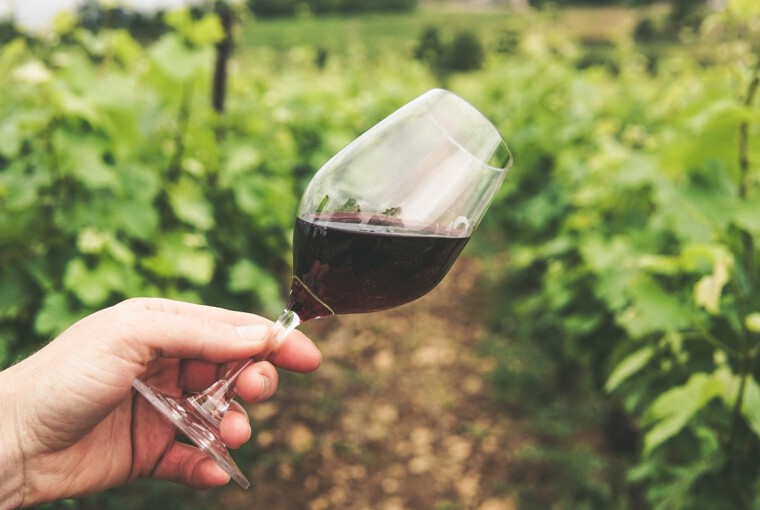 copa de vino vinedo