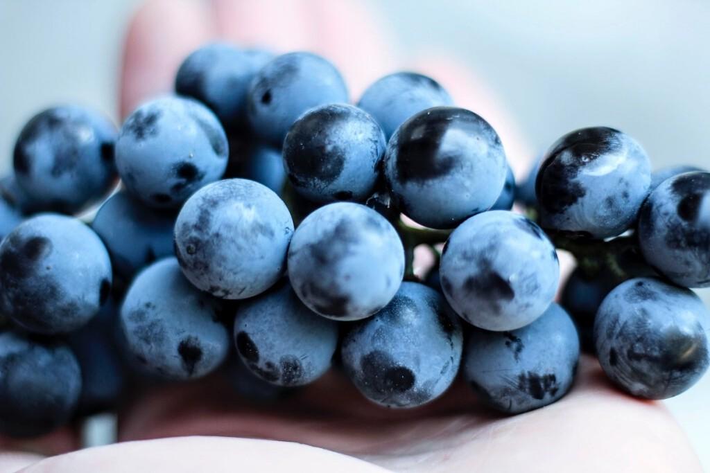 uvas manos personas