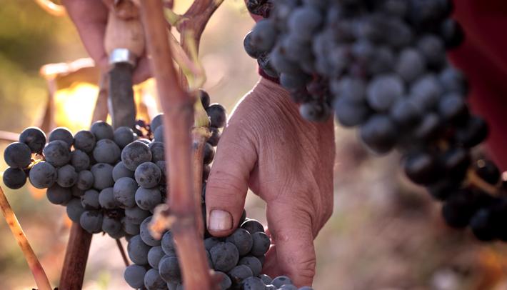 Visitas A Bodegas Y Museo Del Vino En La Rioja Vivanco